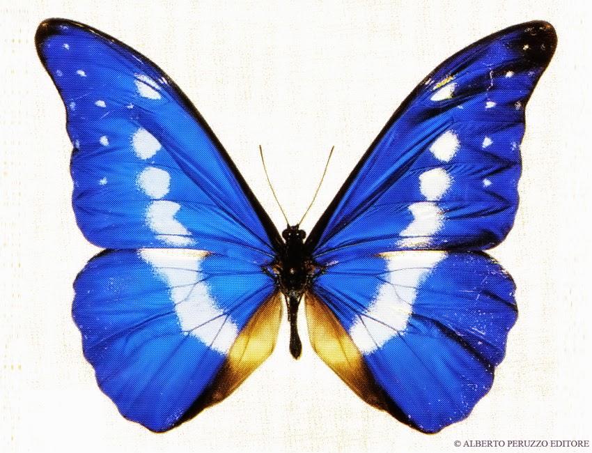 Il vuoto - Immagini di farfalle a colori ...